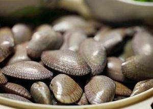 北海花甲螺