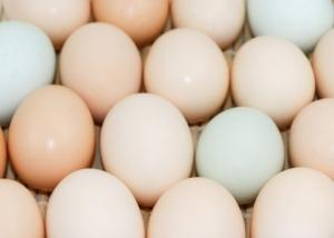 防城港鸡蛋